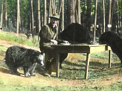Horace M. Albright, Superintendent of Yellowstone National Park, with bears from the park, 1922 (National Park Service)