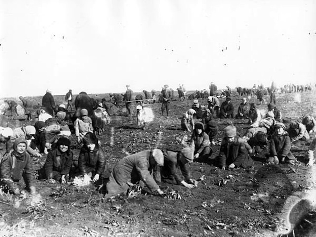 Children are digging up frozen potatoes in the field of a collectivefarm. Udachne village, Donec'k oblast 1933