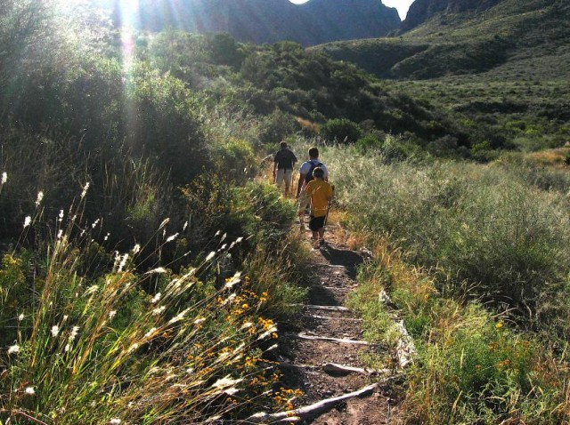 Image of three individuals hiking a relatively flat trail among a landscape of green shrubs in Big Bend National Park