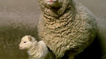Dolly the Sheep Transforms History
