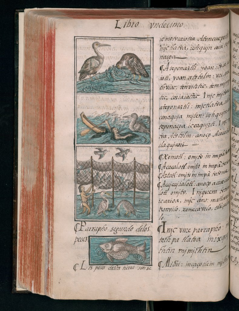 "Bernardino de Sahagún, and others, ""Florentine Codex, On birds and fish,"" Book 11. Natural History (Biblioteca Medicea Laurenziana, Florence, Italy)"