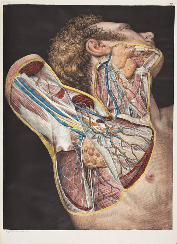 large_Bourgery_1832_anatomy