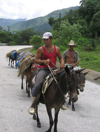 Rural transport in the Sierra Maestra mountains where Fidel Castro fought as a guerrilla leader.