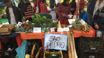 Quilombo São Pedro participates in the Ninth Annual Quilombo Seeds Festival in Eldorado, São Paulo, August 2016. Courtesy the author.