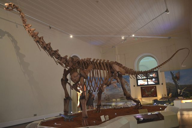 skeleton of the dinosaur Maxikalisaurus